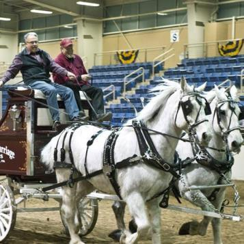 Rep Pashinski does his best while driving a draft horse wagon at the 2017 Farm Show.